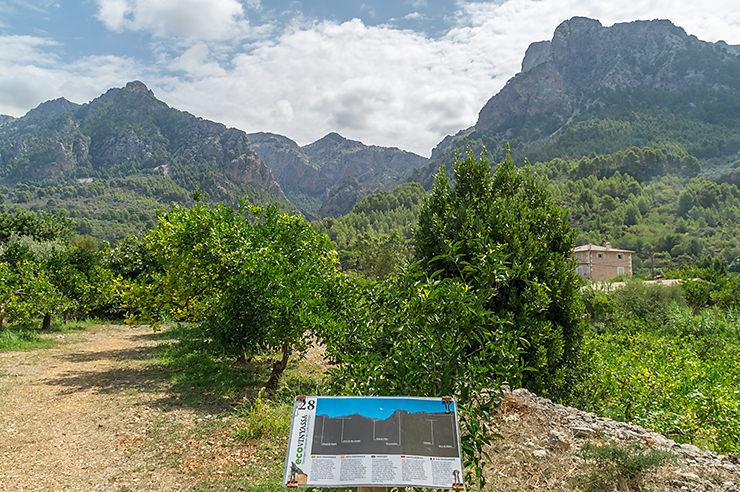 Orangen Plantage Ecovinyassa in Soller auf Mallorca Besichtigung Urlaub Ausflug Tipp