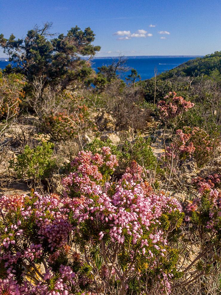 Mallorca im Winter und Advent, Weihnachtsmartk, Wandern, Silvester, Kurztrip, Palma de Mallorca, Urlaub, Tipps