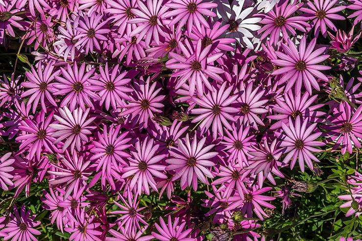 Gärten von Alfabia auf Mallorca - Jardines de Alfabia Mallorca bei Soller - Ausflug Tipp in einen wunderschönen Garten mit Blumen, Tieren und viel Natur. Öffnungszeiten & Infos