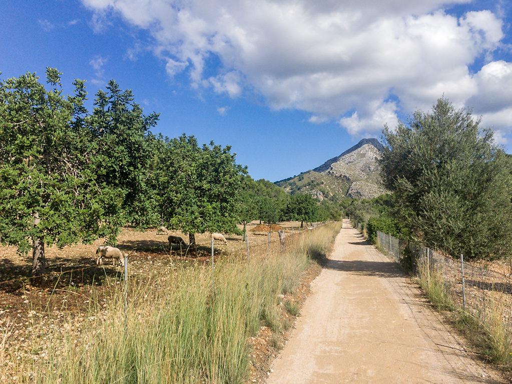 Mallorca Wanderung auf der Finca Galatzo bei Calvia mit Blick auf den Puig de Galatzo - Wandern für Familien mit Kindern