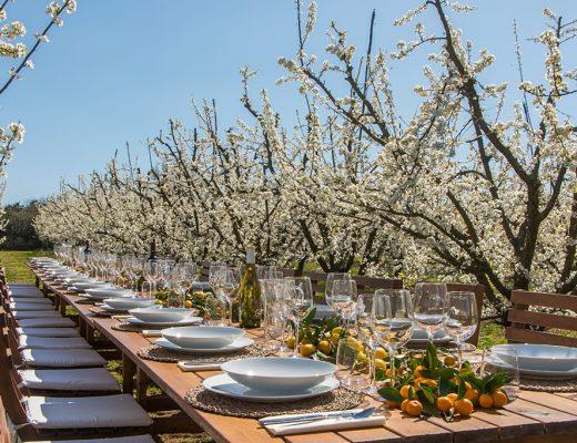 Terragust Mallorca - Menü Picknick in der Natur nahe Manacor mit Erlebnis auf dem Bauernhof
